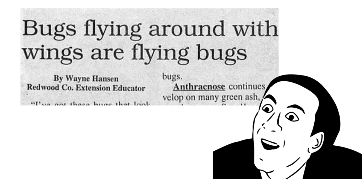 bugs flying around with wings are flying bugs